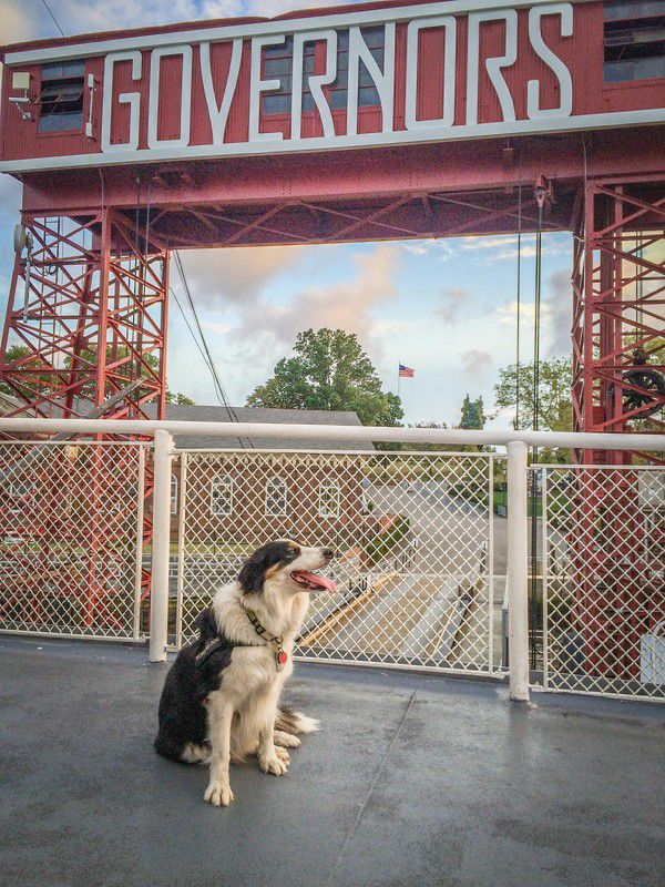 Max can't wait to greet his visitors. (Photo courtesy The Trust for Governors Island)