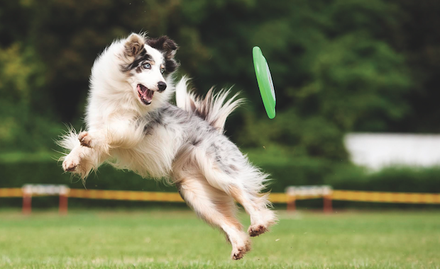 How to Teach Your Dog to Fetch – Dogster