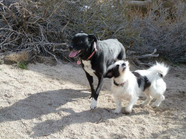 Training your dogs to be off-leash is much more reliable than using a collar. Photo Credit: Abbie Mood