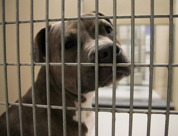 Dog in shelter by Shutterstock.