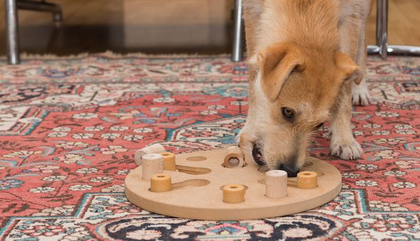Dog playing with puzzle toy by Shutterstock.