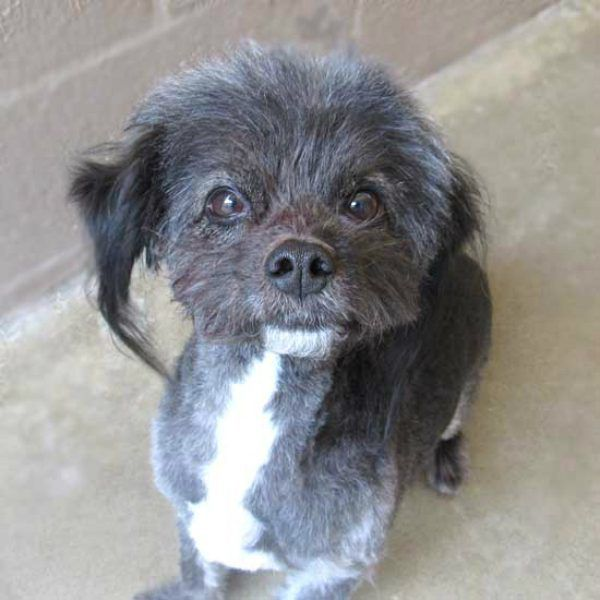 Post makeover, Neville is practically a puppy again! (All photos courtesy the Helen Woodward Animal Center)