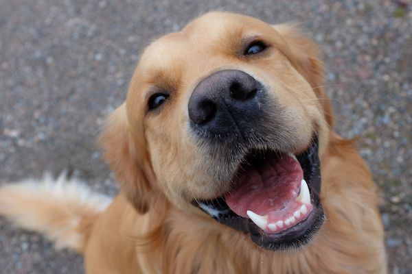 Smiling dog by Shutterstock.