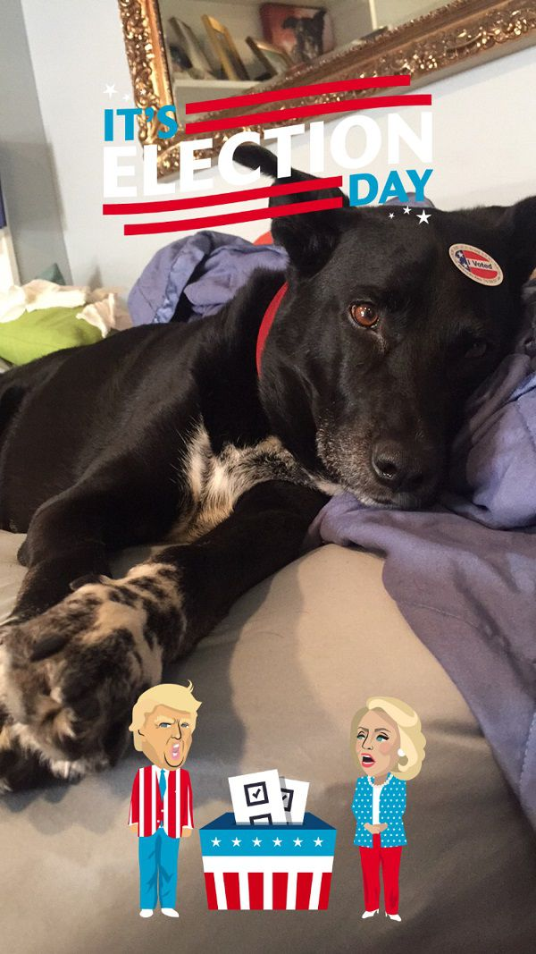 Riggins the morning of election day resting up for his duty as support dog later that day. (Photo by Wendy Newell)