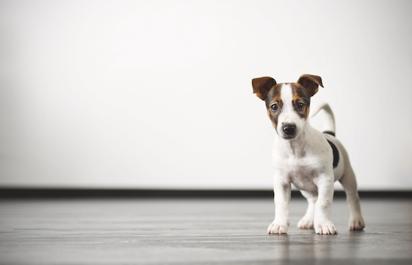 A puppy. Photography by Shutterstock.