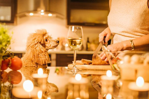 A dog begging for food at the holiday part table.