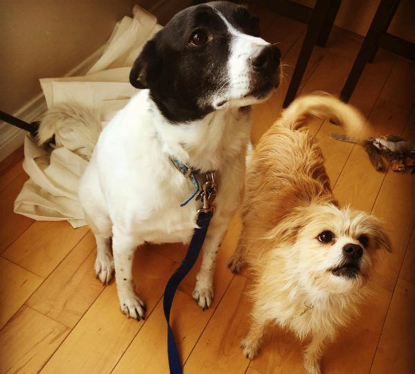 Max and Lucy getting into trouble together after knocking down a curtain rod (photo courtesy @detroitdesign)