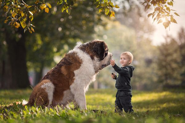 Saint Bernard Little Kids Big Dogs Andy Seliversoff