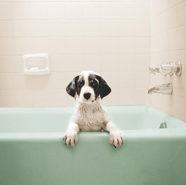 Dog in bathtub by iStock.