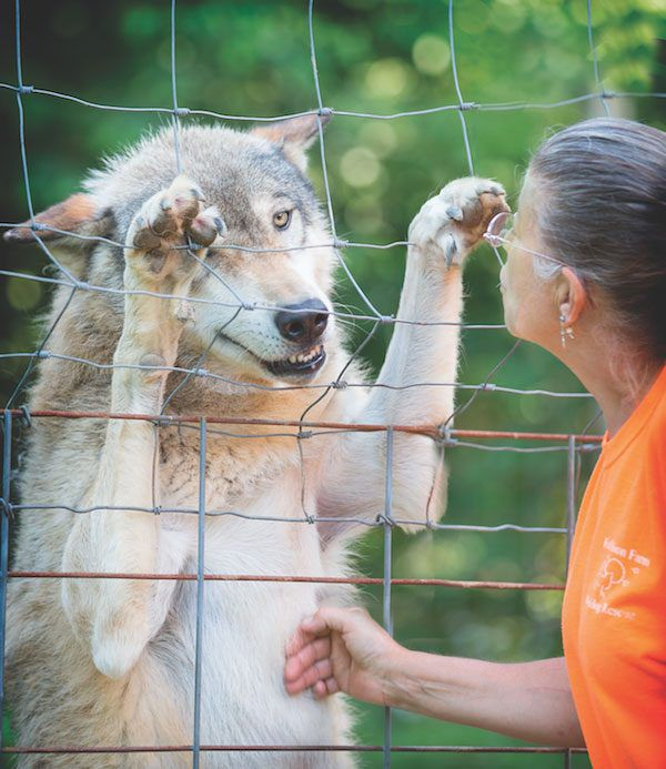 Nancy Brown, founder of Full Moon Farm, with wolfdog Aries. (Photo by Lo Castro)