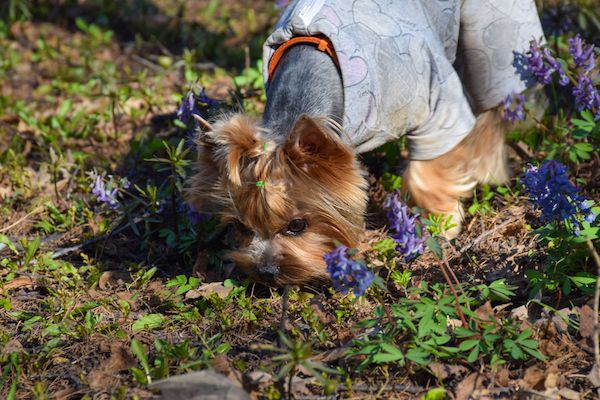 Letting your dog sniff around gives them the all-important mental exercise, too. (Photo by Shutterstock)