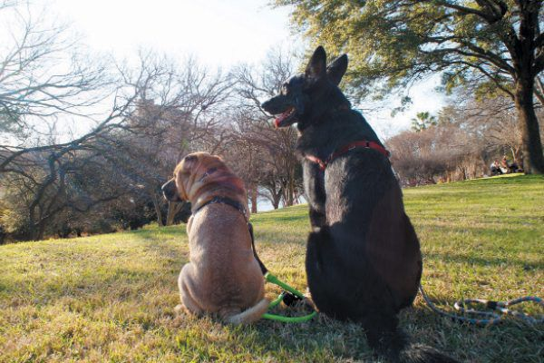 Two dogs hanging out in a park.