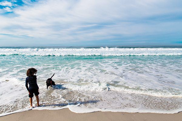 Take your dog off leash at the world famous beautiful Carmel Beach.
