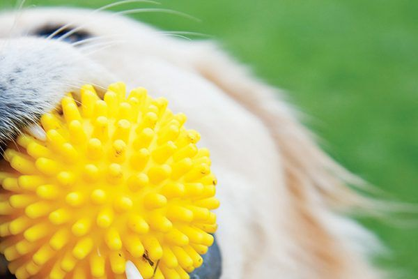Closeup of a dog toy. Photography by cunfek/istock.
