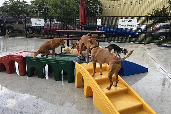 None of the dogs cared about the rain but continued to play chase in the outside off-leash bar area.