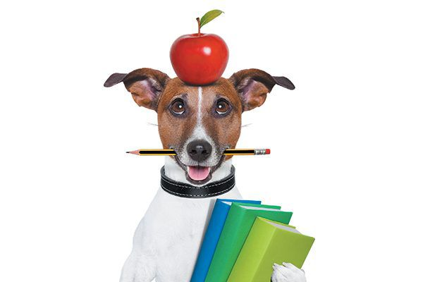 A dog balancing on apple on his head and holding books.