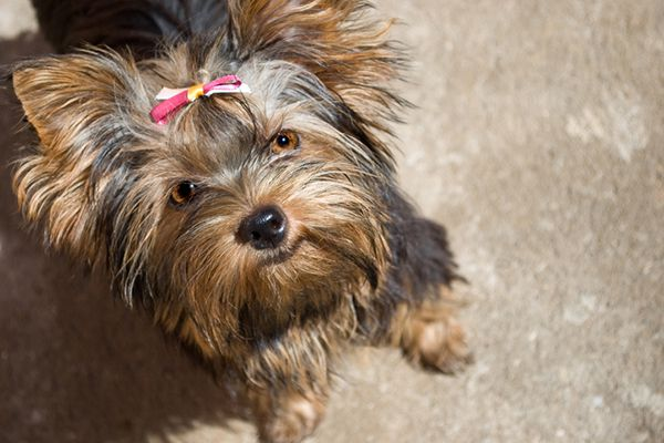 A female dog with a pink ribbon.