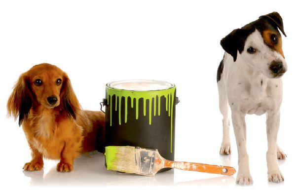 Two dogs with a bucket or can of paint.