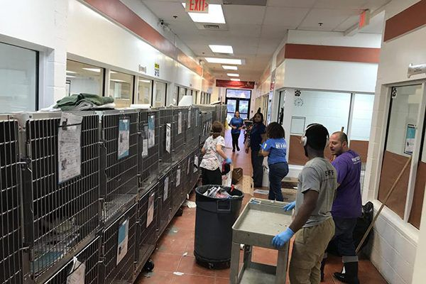 The scene inside the Humane Society of Greater Miami.