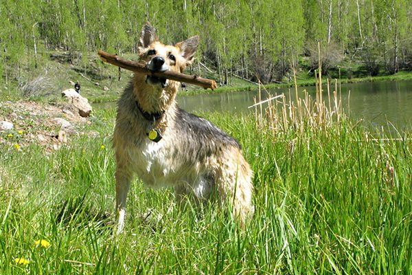 Jerry, the dog who inspired Rene Agredano and her husband to start Tripawds.com.