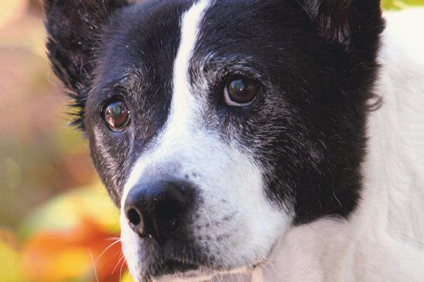 The Grey Muzzle concept was inspired in part by Sassy, a senior dog rescued by founder Julie Dudley and her husband.