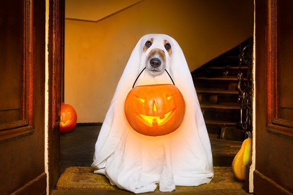A dog holding a Halloween trick or treat basket.
