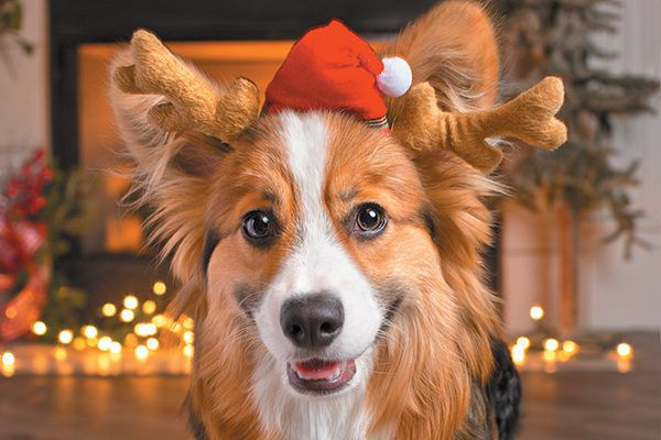 A dog in a Santa holiday hat.