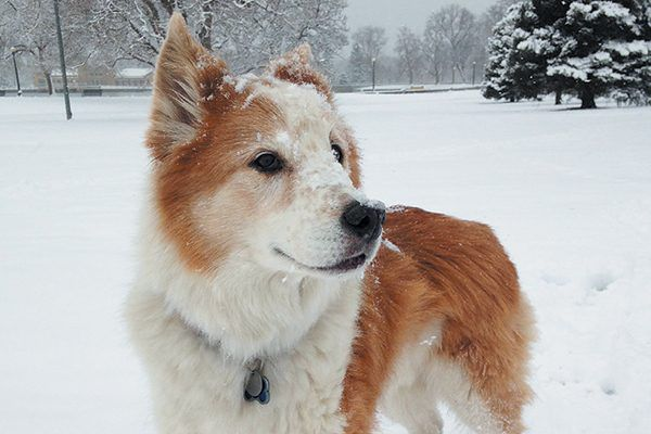 Just one of many recipients, Dexter received a grant from The Pet Fund for cancer treatment.