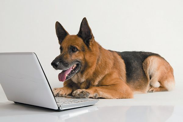 A happy dog on a computer.