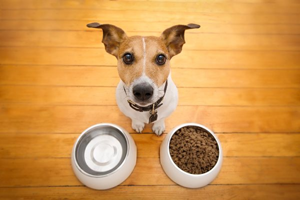 A hungry dog looking up from his food and water bowls.