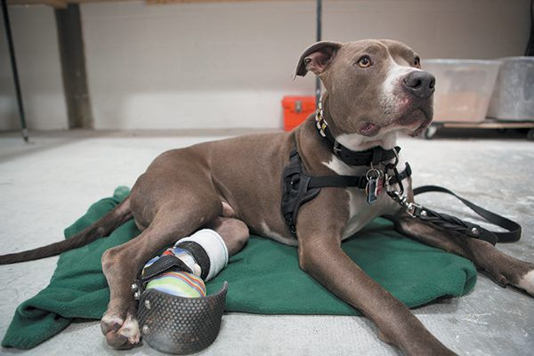 A patient at Animal Ortho Care.