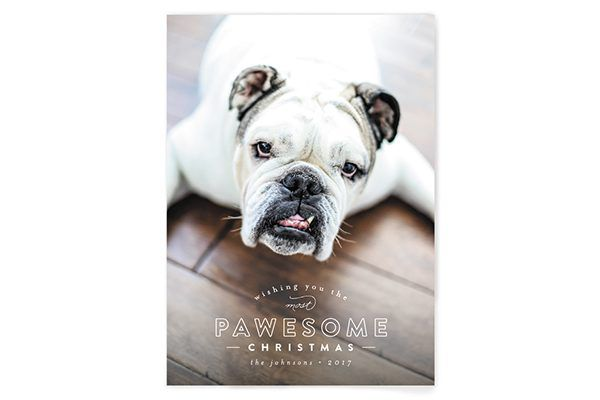 Minted holiday cards for dog lovers.