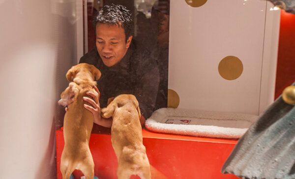 Macy's Holiday Windows feature adoptable cats and dogs.