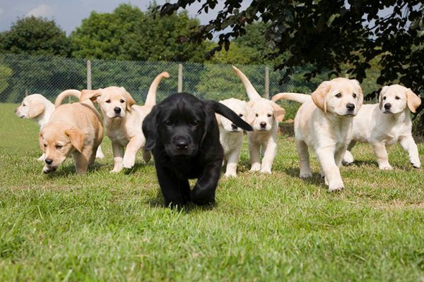 These cute puppies could grow up to be Vapor Wake dogs!