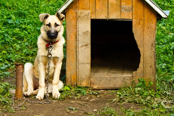 A dog tethered to a dog house.