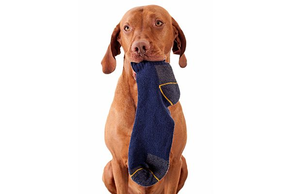 Your Dog Ate a Sock
