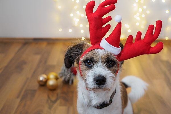 A dog with a Santa hat and antlers.
