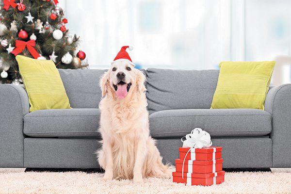 A happy dog with a Christmas tree and presents. Photography ©Ljupco | Thinkstock.