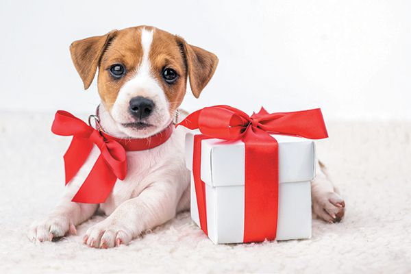 A puppy with a holiday gift.
