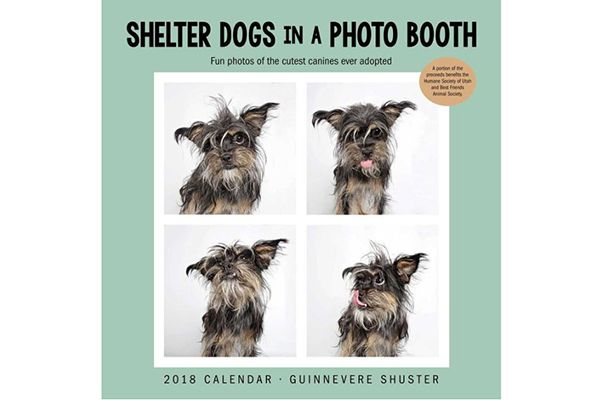 Shelter Dogs in a Photo Booth.