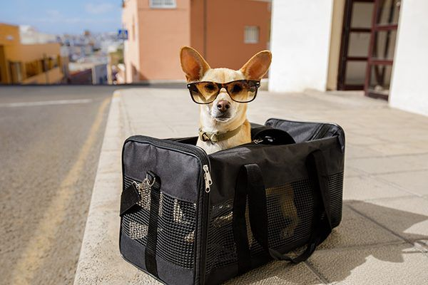 A dog in a travel carrier with sunglasses on.