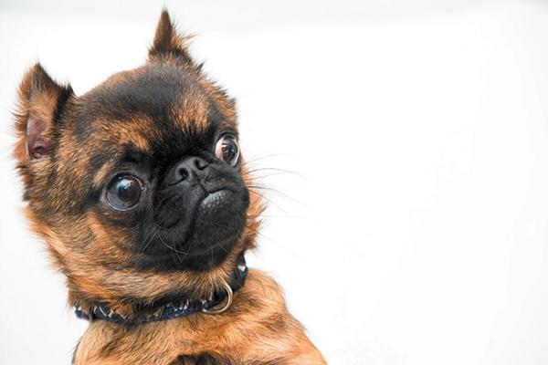 dog's stomach making noises