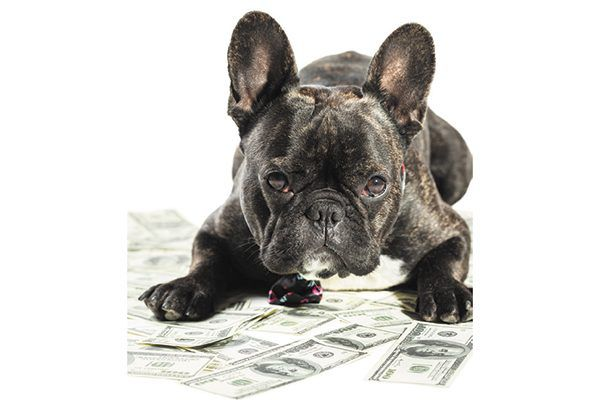 A dog sitting on a pile of money.