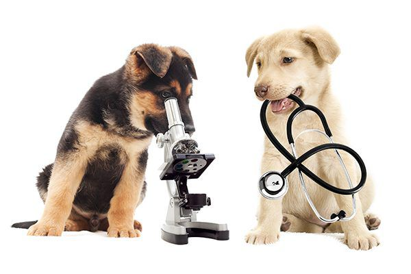 Two puppies with microscope and stethoscope.