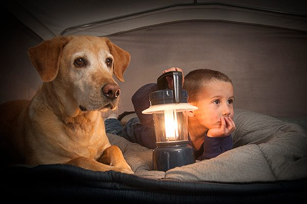 A fearful, scared dog hiding under the covers with a boy.