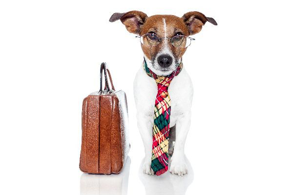 Dog with tie, briefcase and glasses ready to go to work.