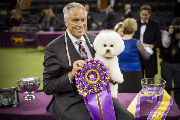 Flynn, the Bichon Frisé who won Best in Show, and his handler.