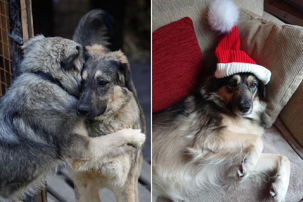 Kali and Molly at Shelter; Kali in her forever home.