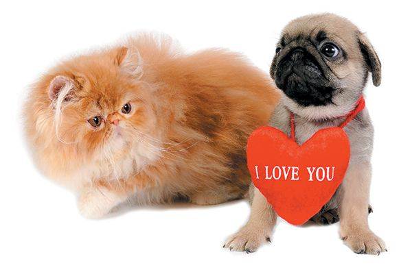 A dog and a cat celebrating Valentine's Day.