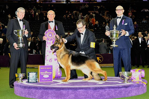 Westminster Kennel Club.